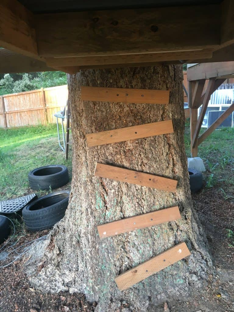 2x4 tree ladder up to the trap door